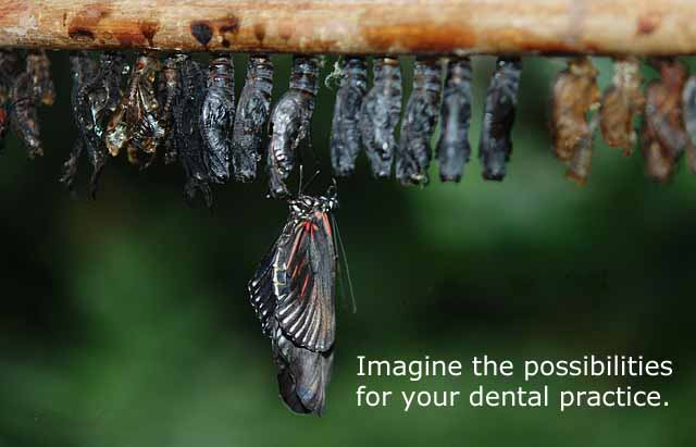 Butterfly emerging from chrysalis to illustrate what Vision in Business can do for dental practices